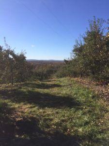 fall 2015 apple picking 1