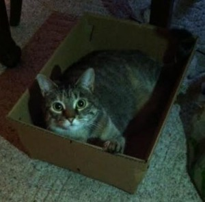 Thalia in a box - ed